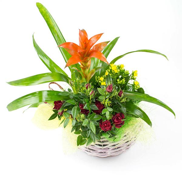 Композиция със саксийни растения