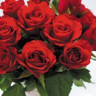 Картичка червени рози