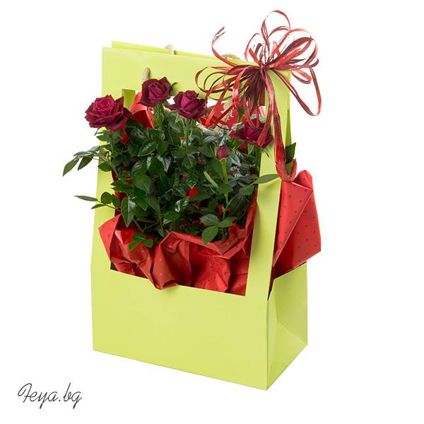 Мини роза в подаръчен плик