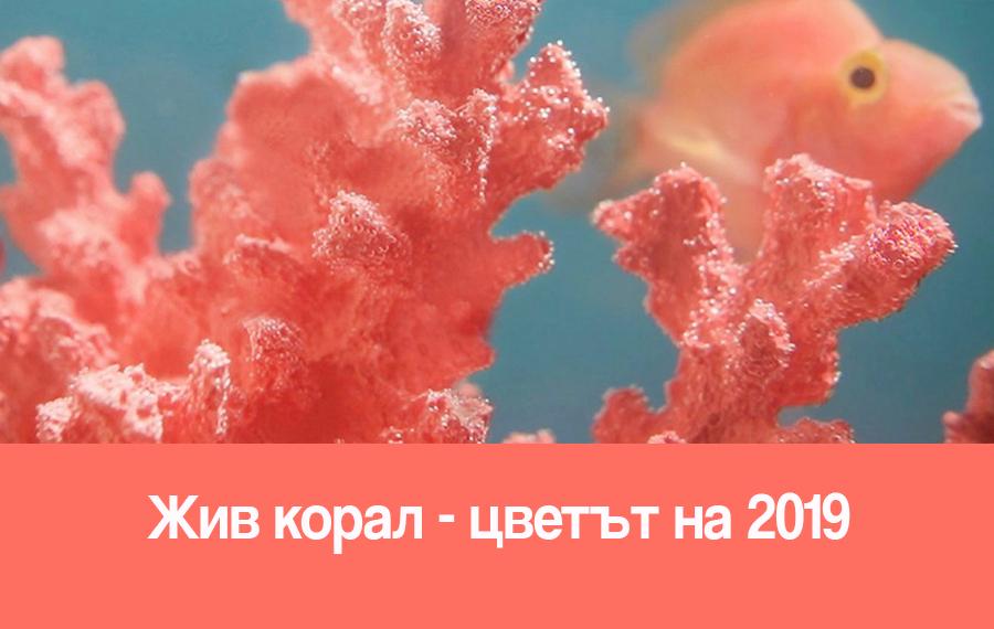 Жив корал-цветът на 2019