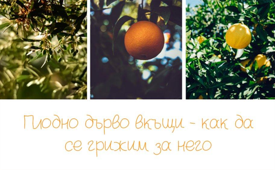Плодно дърво вкъщи