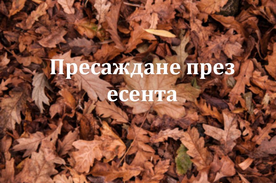 пресаждане през есента
