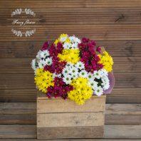 Пъстроцветни хризантеми